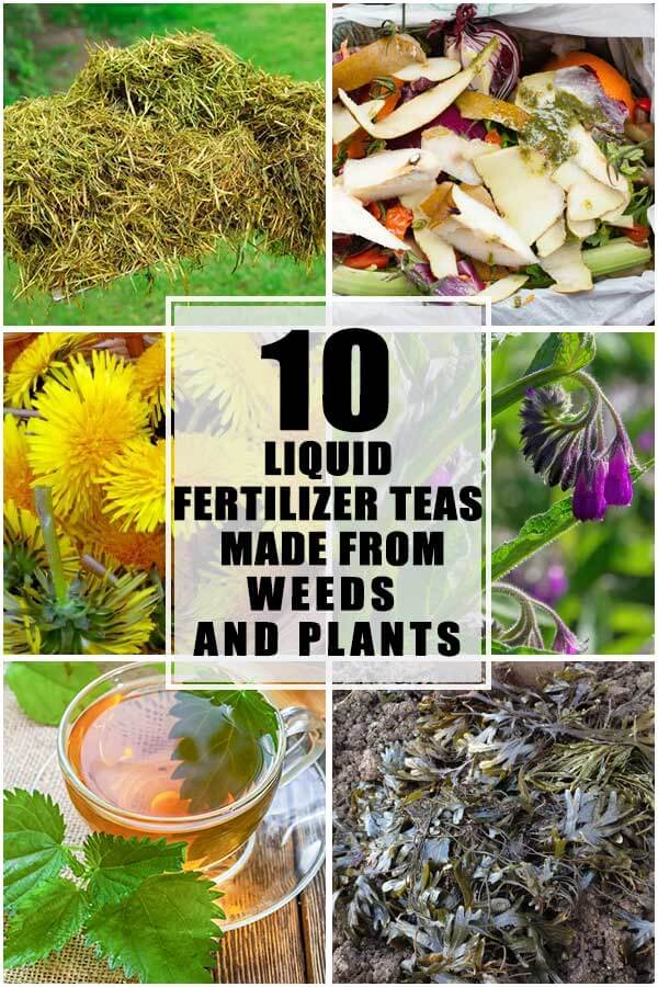 10 Liquid Fertilizer Teas That You Can Make From Weeds and Plants