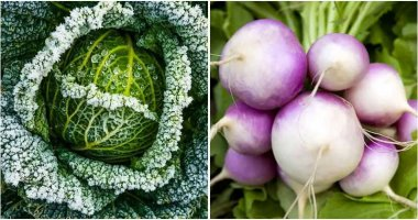 10 Vegetables That Have Taste Better After Frost