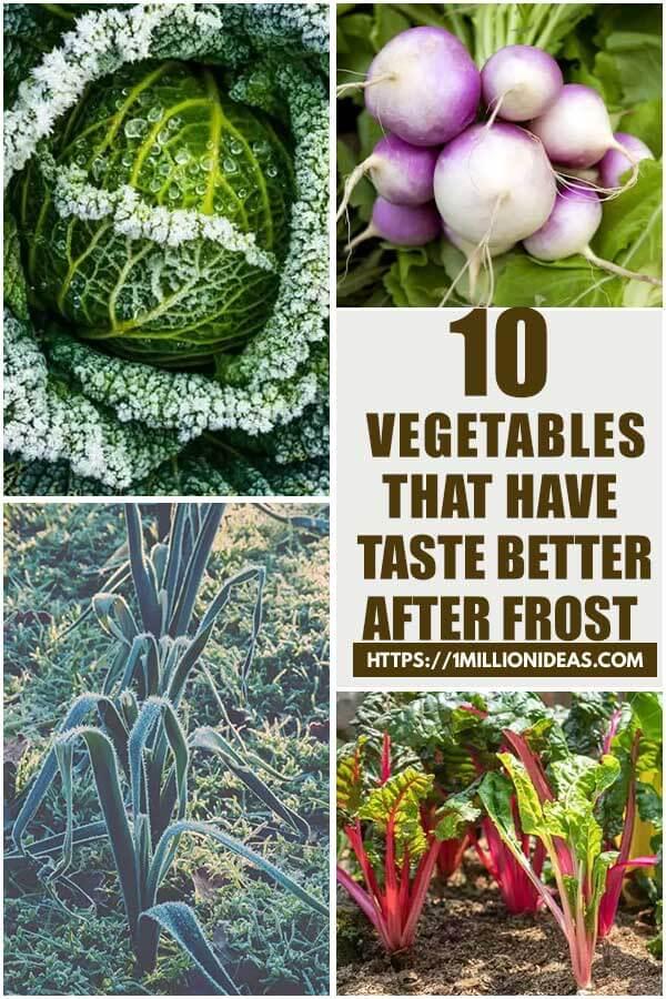 10 Vegetables That Have Taste Better After Frost