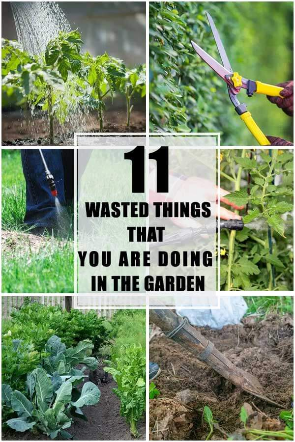 11 Wasted Things That You Are Doing In The Garden