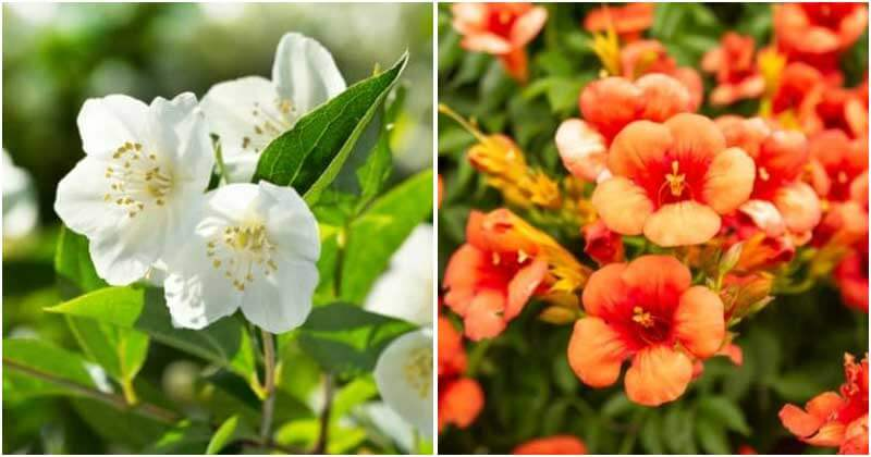 12 Beautiful Climbing Flowers For Your Trellis