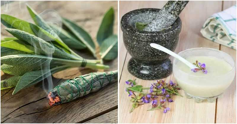 12 Best Uses Of Sage To Grow In The Garden