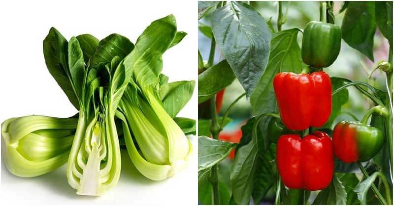 12 Most Nutritious Vegetables That You Should Grow In The Garden