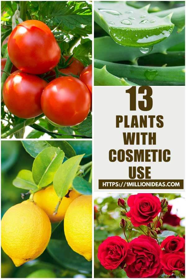 13 Plants with Cosmetic Uses