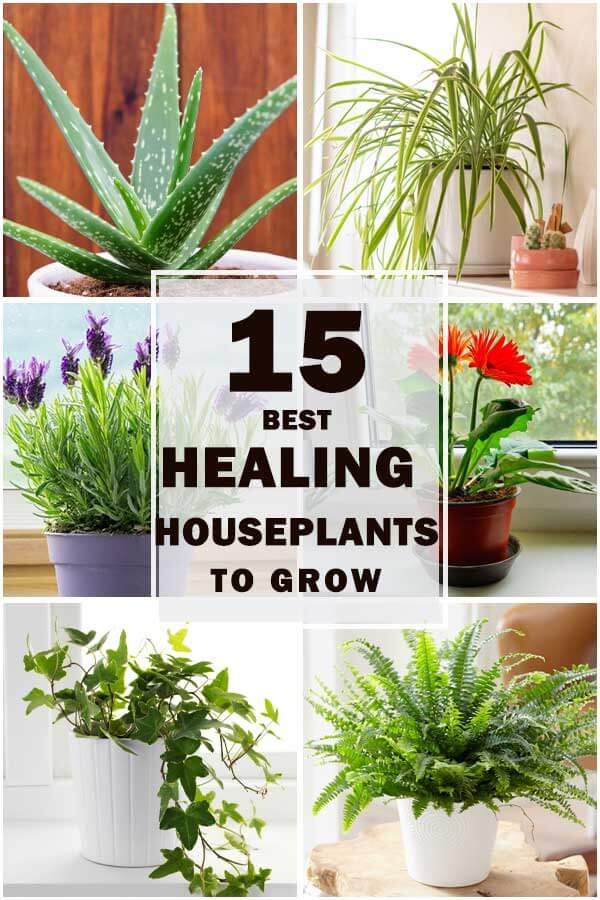15-Best-Healing-Houseplants-To-Bring-Home-ft2