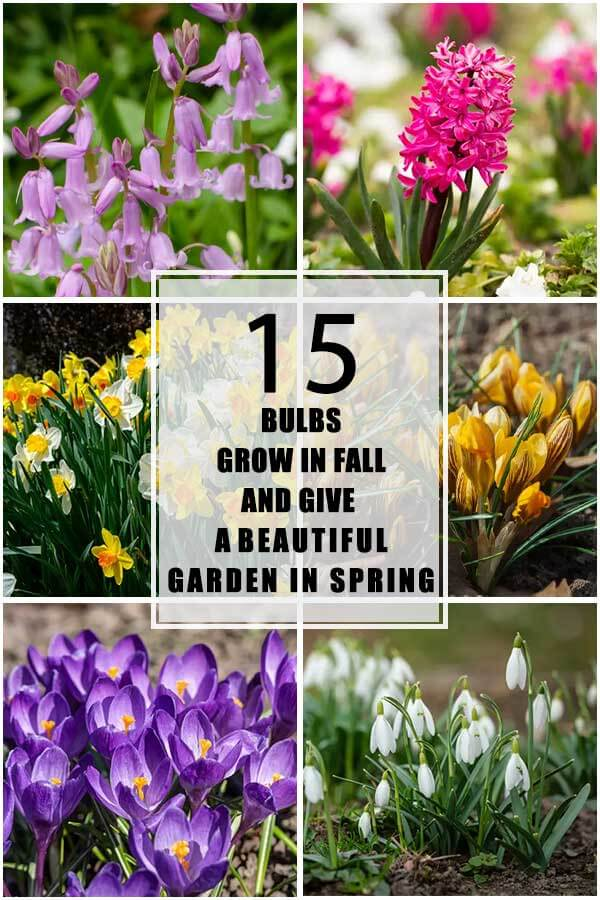 15 Bulbs That Grow In Fall And Give A Beautiful Garden In Spring