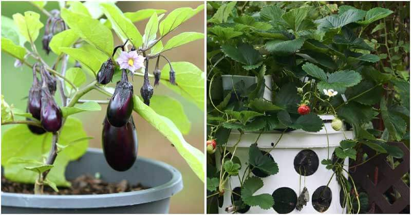 15 Fruits And Veggies That Grow Well In Gallons