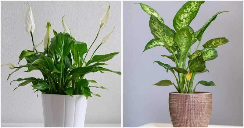 16 Best Plants To Grow In Your Bathroom