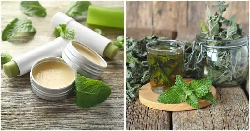 16 Uses Of Mint That You Should Grow In The Garden