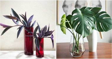 20 Indoor Plants That Can Be Grown In Vase