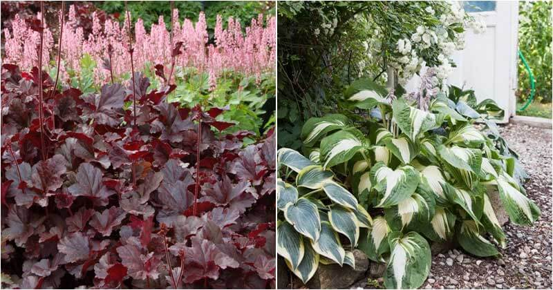 20-Lush-Plants-For-A-Beautiful-Shade-Garden-ft