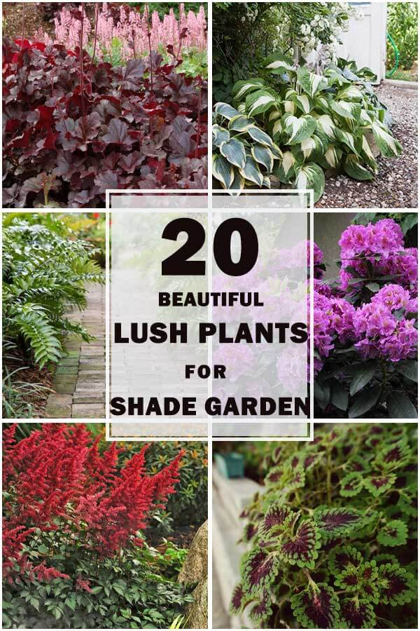 20-Lush-Plants-For-A-Beautiful-Shade-Garden-ft1