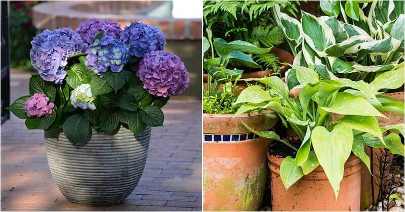 20-Shade-Loving-Plants-For-Containers-And-Hanging-Baskets-ft