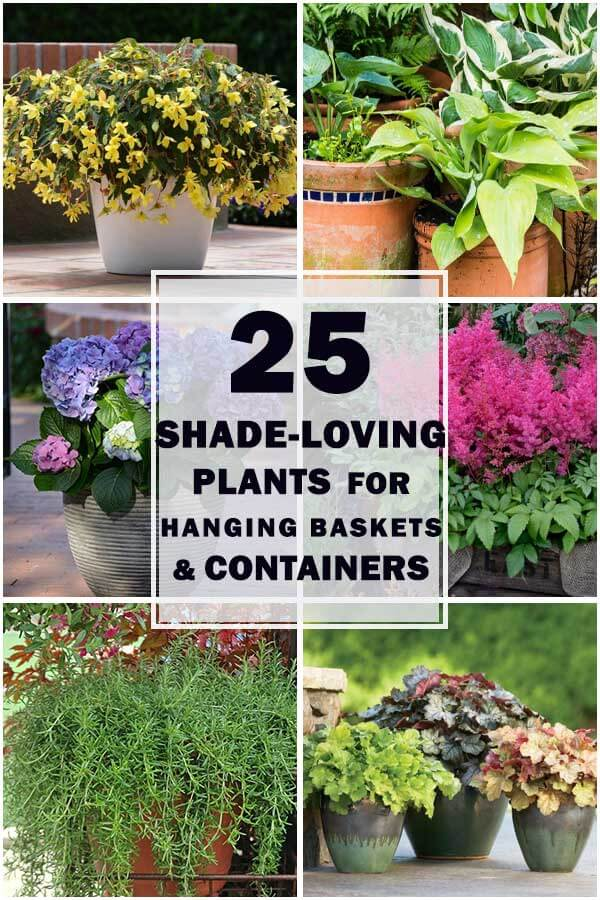 20-Shade-Loving-Plants-For-Containers-And-Hanging-Baskets-ft1