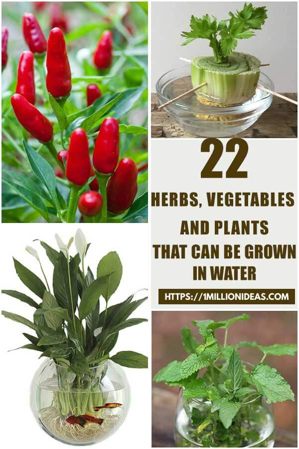 22 Herbs, Vegetables And Plants That Can Be Grown In Water