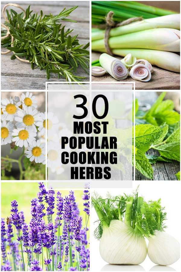 30 Most Popular Cooking Herbs