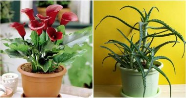 30 Houseplants That Aren't Good For Your Dog