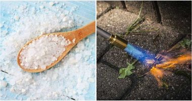 6 Homemade Herbicides To Kill Weeds