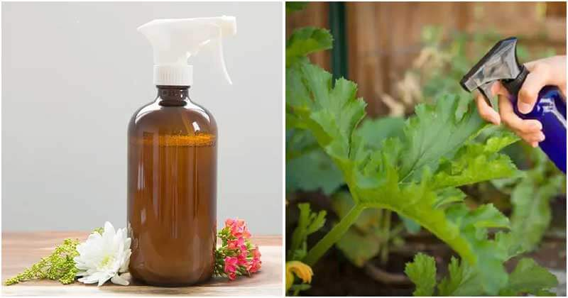 6 Uses Of Peppermint Oil In The Garden That You Should Know