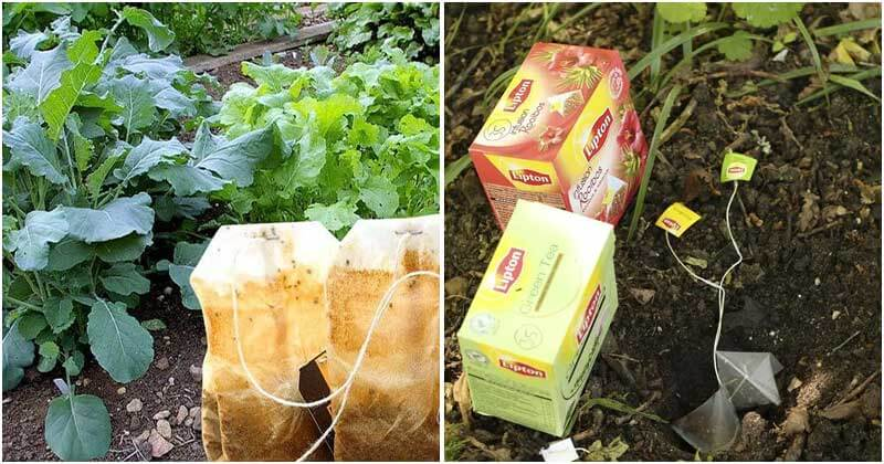 7 Best Uses Of Tea Bags For Your Garden