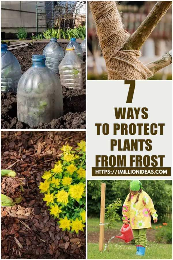 7 Great Ways to Protect Your Plants From Frost