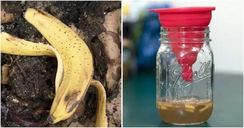 8 Amazing Uses Of Banana Peel In The Garden