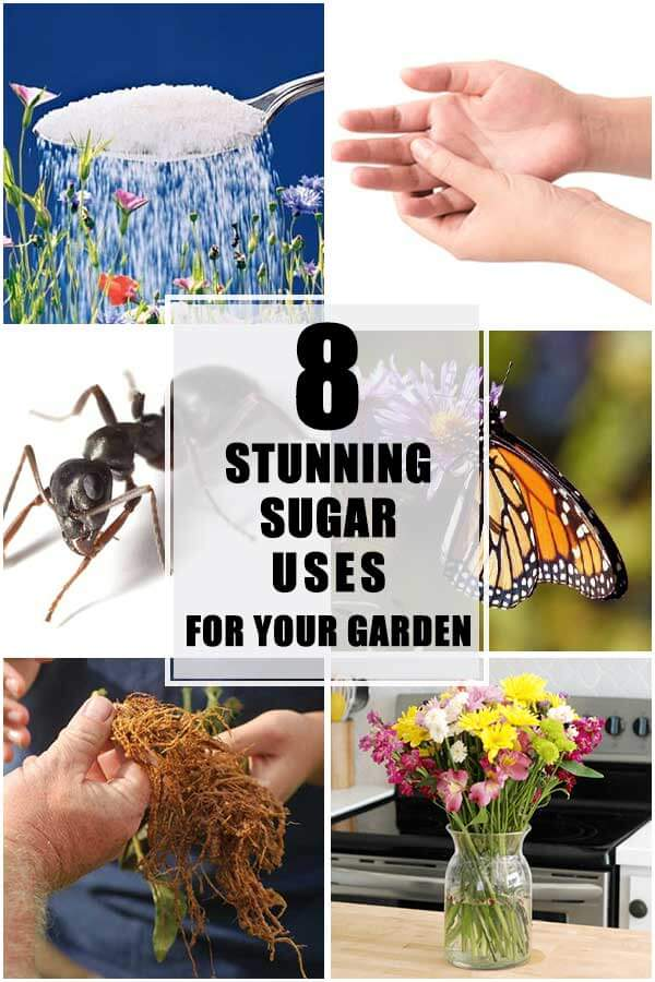 8 Stunning Sugar Uses For Your Garden