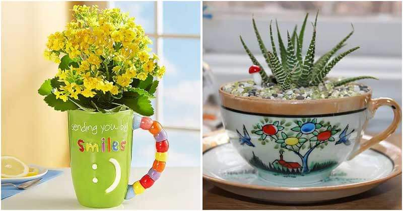 8 Succulents Can Grow in Teacups and Coffee Mugs