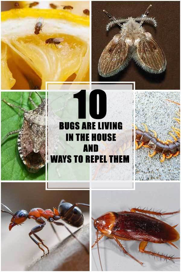 Bugs Are Living In Your House And Ways To Repel Them