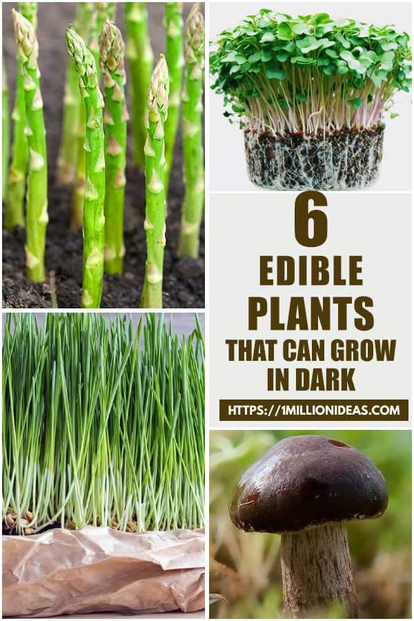 Edible Plants Grow In The Dark