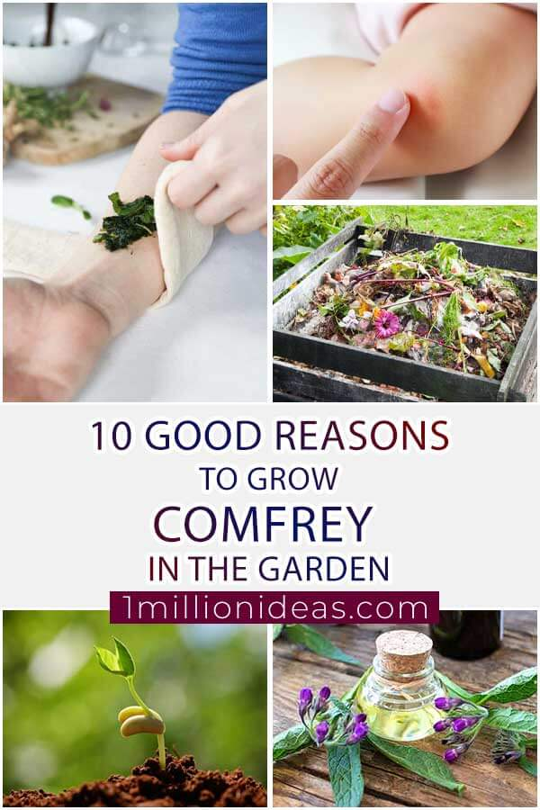 10 Good Reasons To Grow Comfrey In The Garden