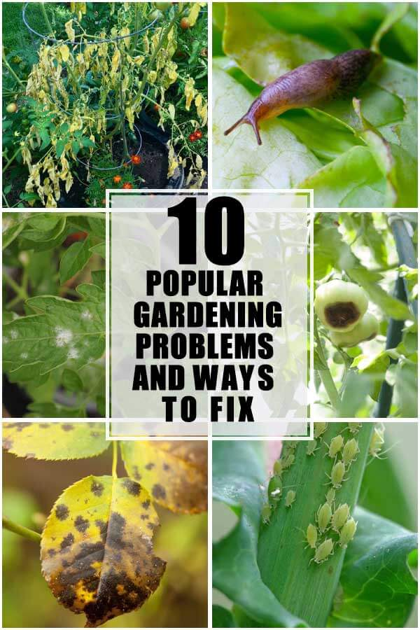 10 Most Popular Gardening Problems and Ways To Fix Them