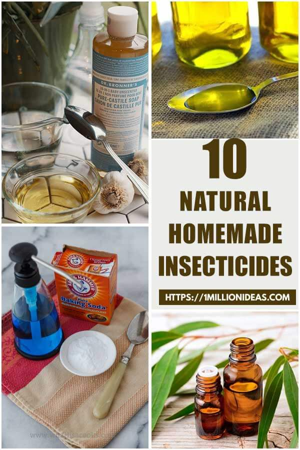 10 Natural Homemade Insecticides