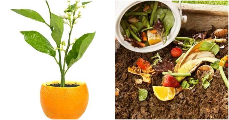 10 Orange Peel Uses For The Garden