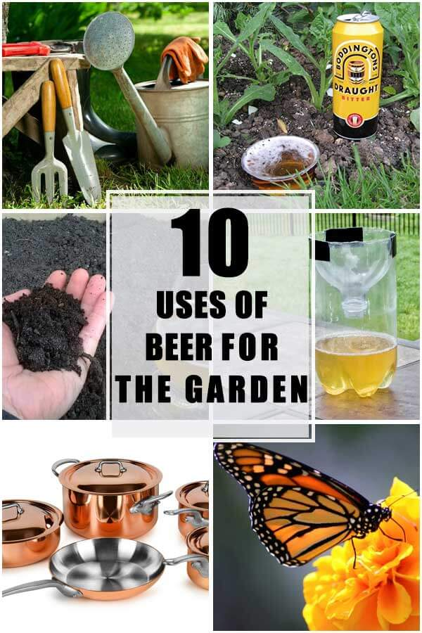 10 Uses Of Beer For the Garden
