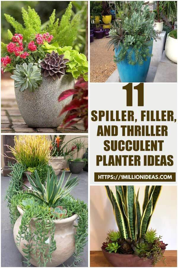 11 Best Spiller, Filler, And Thriller Succulent Planter Ideas