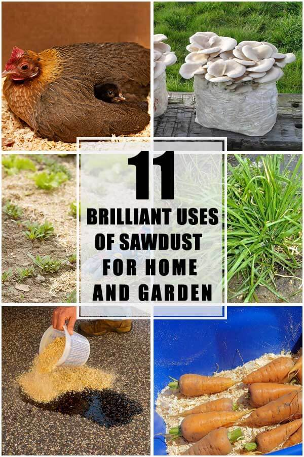 11 Brilliant Uses Of Sawdust For Your Home and Garden