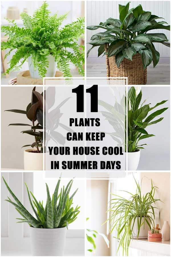 11 Plants That Can Keep Your House Cool In Summer Days