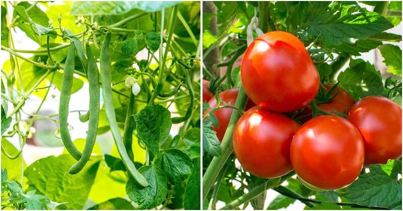 11 Types of Summer Veggies To Grow In A Raised Bed
