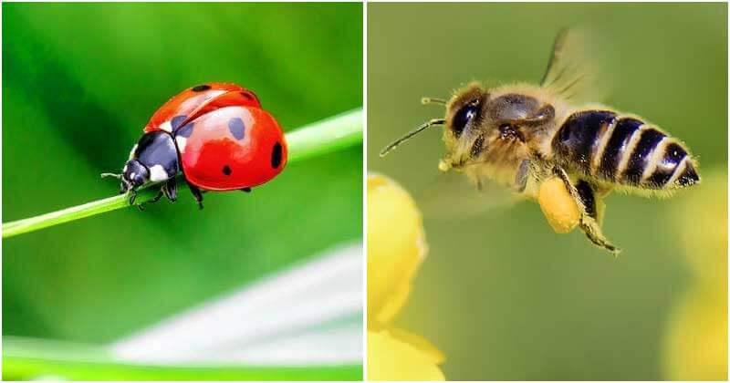12 Beneficial Insects That Are Good For Your Garden