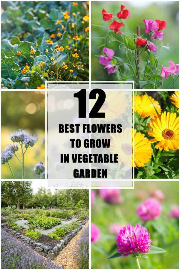 12 Best Flowers To Grow With Vegetables In The Same Garden