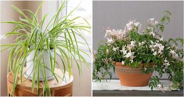12 Best Indoor Plants For The Kitchen