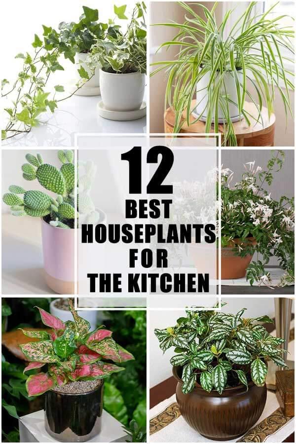 12 Best Indoor Plants For The Kitchen