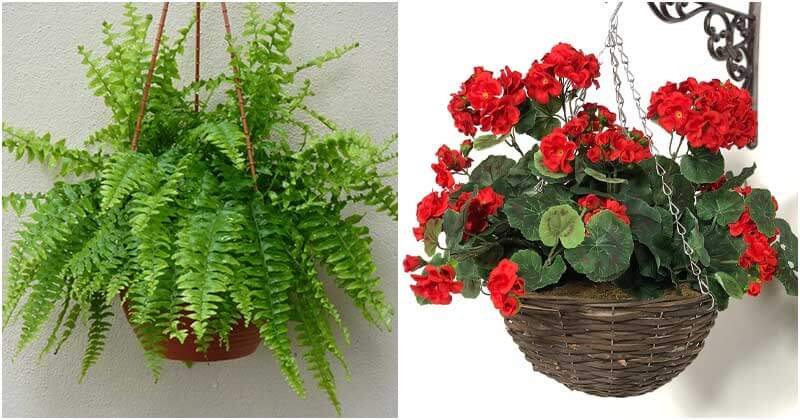 12 Plants To Grow On The Hanging Baskets In Shade