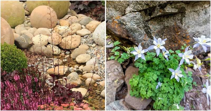 13 Best Plants For A Rock Garden