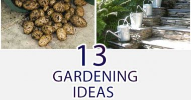 13 Gardening Ideas With Bucket