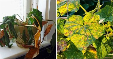 13 Quick Hacks To Save Dying Plants