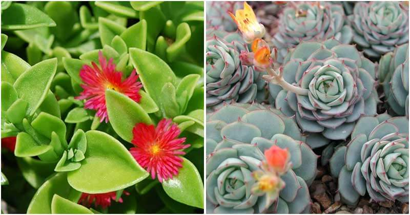 13 Succulents That Can Propagate From Cuttings