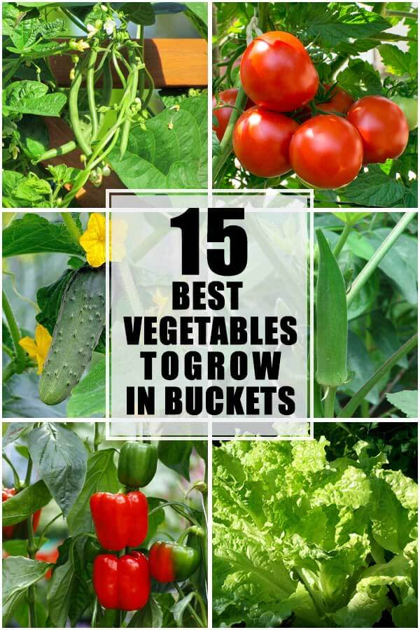 15 Best Vegetables That You Can Grow In Buckets