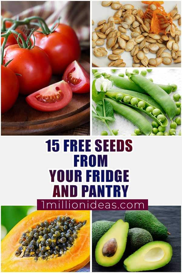 15 Free Seeds From Your Fridge or Pantry
